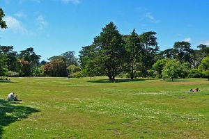 "Photo of San Francisco Botanical Garden ""Great Lawn"" taken by Stan Shebs, June 2005"
