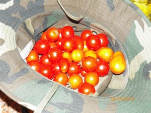 A mixture of husky cherry and grape tomatoes, a must in my garden every year.
